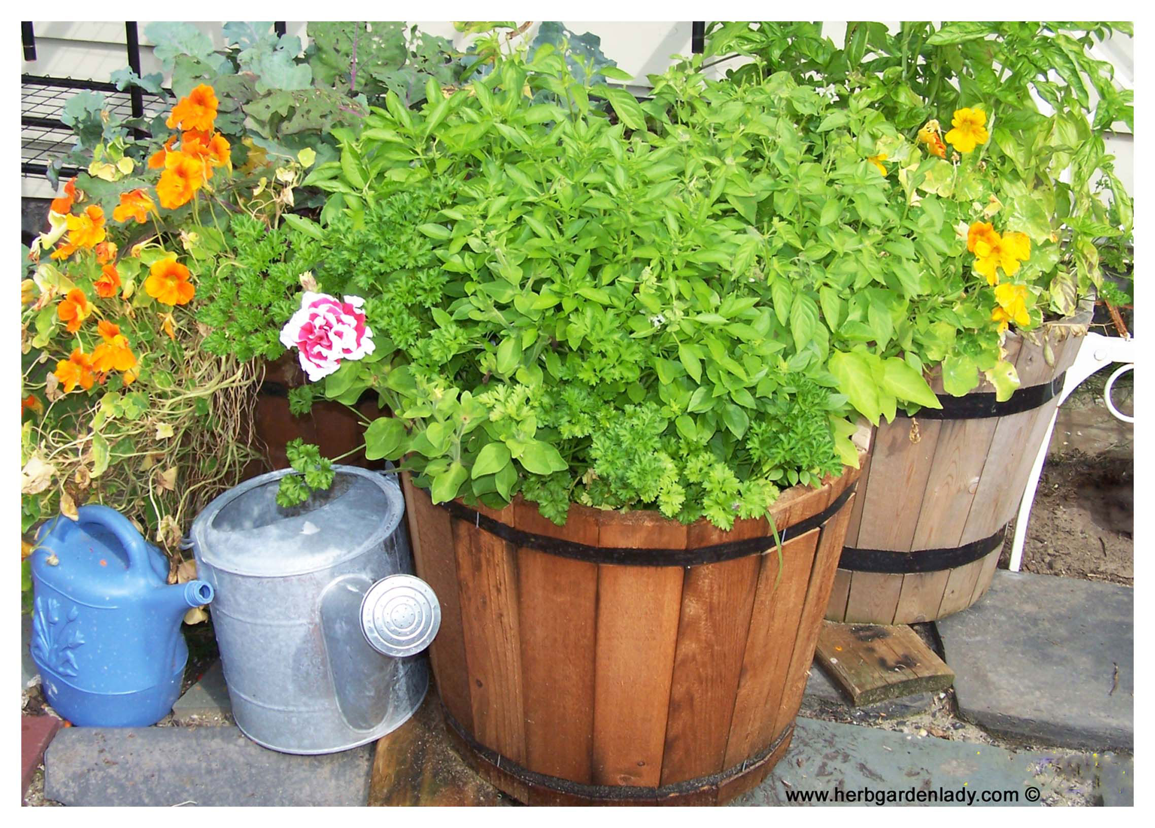Herb planter where to start with pots boxes wagon wheel for Garden planters