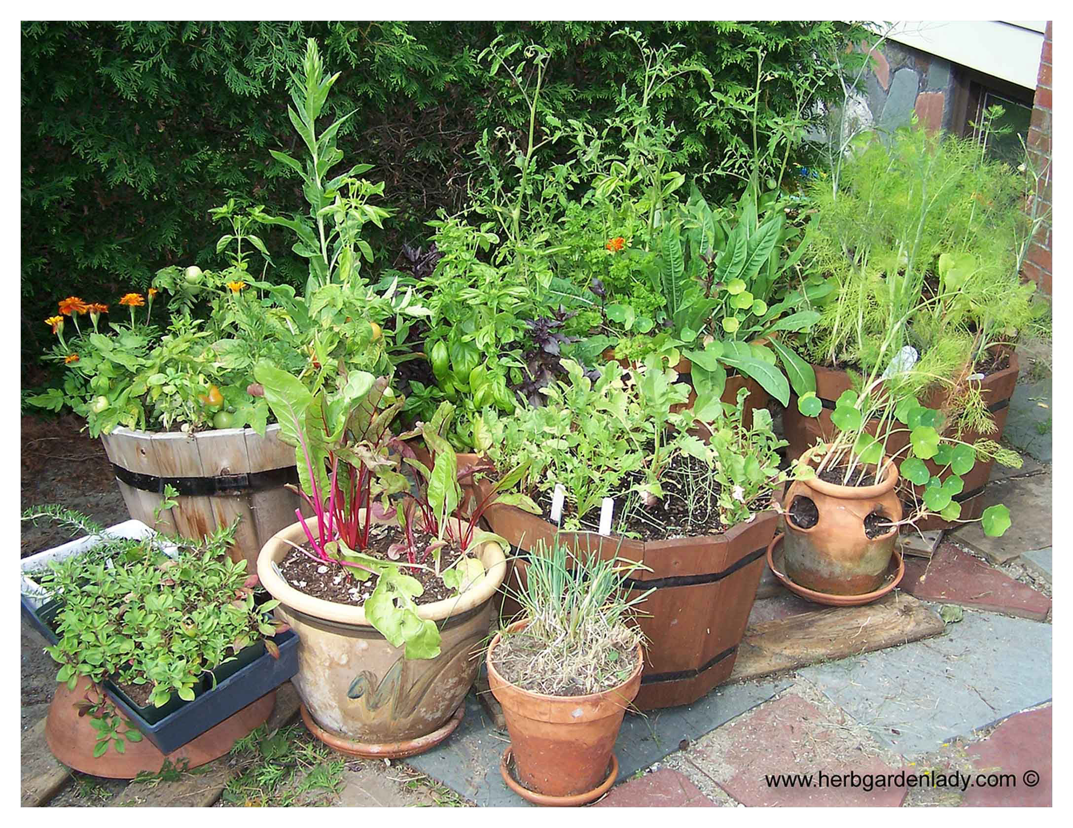 Kitchen herb garden using containers and herb pots