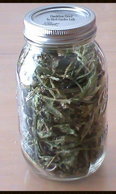 Dandelion herb in a jar that's been fully dried and ready to use.