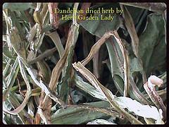 Dried dandelion herb from my garden